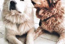 Dog! ❤