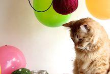 CAT treats (Homemade)