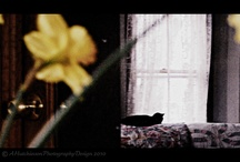 Glass Door Collection by A.Hutchinson Photography / Reflection Project - A Photo Prompt