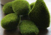 Yosun - Moss applications