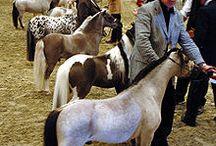 horses / by Jade Noble