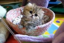 Lindos gatitos / ¿Me pareció ver un lindo gatito?  ¡Es cierto! ¡Es cierto! ¡He visto un lindo gatito!?