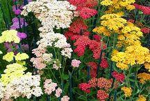 Front garden plant options