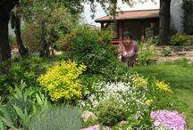 ogrodnictwo-kwiaty