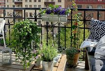 Exteriors: Terrace Gardening