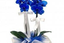cayirova-cicekci / Çayırova Çiçekçi, Çayırova  Çiçek Gönder, Çayırova Çiçekçilik, Çayırova Çiçek Siparişi, Çayırova  Çiçek, Sipariş Tel: 0216 384 7038, Çayırova'ya çiçek göndermek istiyorsanız web sitemizi tıklayın.. www.cayirova-cicekci.com