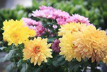 Gardening / Ideas to remember.