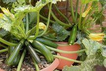 Outdoor. Houseplants. Gardening.