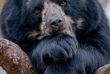orsa, orsàs, orson