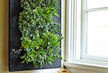 Herbs wall