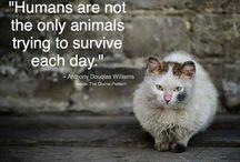 Animais ❤️