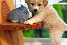 Cute Animals / Animale!