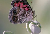 BUTTERFLIES  LADYBUGS DRAGONFLIES / by Woolong