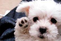 Pets & Pups / by Megan Schachtebeck