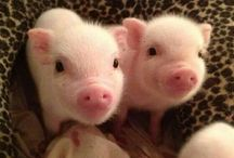 Cute animals I want
