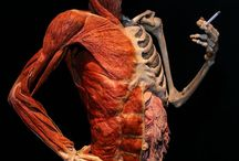 our body