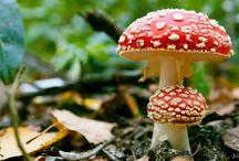 Mushrooms / by Heidi Rie Nielsen