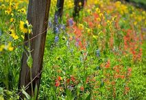 Wild Flowers / by Julie Bolagh
