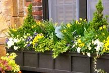 Exterior Plantings, Paint & Pretties