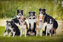 "dogs / psi s ,,duchom"""