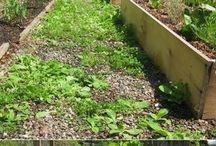 Ideer til hagen