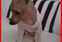 Egon, AHT / A sweet dog