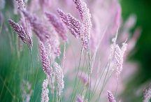 obilí a trávy