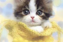 Pets & Tiny Creatures
