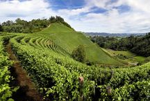 Winery tours of Italy / Asolando offers exclusive tours of wine tasting in Italy, from Piedmont to Tuscany in the discovery of the most beautiful vineyards.