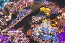 Ocean creatures & plants / Ocean creatures and plants
