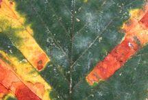 kár és kórképek / plant protecton