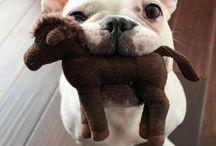 Dogs / The man's best friend