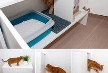 cats Ideas
