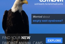 Eagle Cam Live  / Live cam above an Eagle's nest in Decorah.  Will reopen in September 2012.  Awesome!  Watch the mating, laying of eggs, watch the hatching.  Then watch them grow, learn to fly and then to leave the nest.   / by Linda Sanders