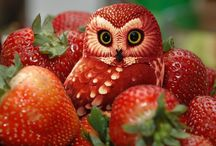 Owl fruit