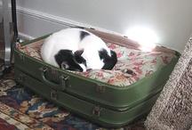 Pet bed from an old suitcase / Maleta como cama para las mascotas / Camas para las mascotas hechas con antiguas maletas