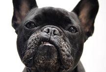 Photography inspo: Animals
