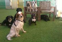 asilo per cani milano
