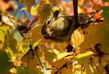 Lunnika-Horo`s Nature Photography / I upload my new nature photography here =)