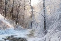 winter scene / photo of a snowy forest