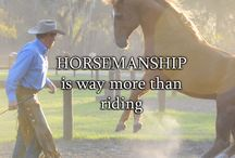 Bitless and horsemanship