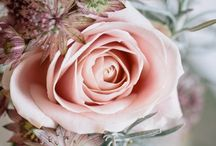 Cactus Rose Colors