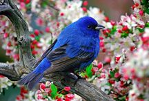 CHIRPING BIRDS / by Grazia Merlo
