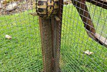 Kilpikonnat