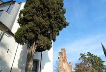 Castelfranco Veneto 2013