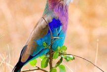 birds i like