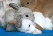 bunny loving