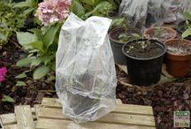 bouturage for my garden