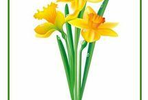 Kvety a bilinky