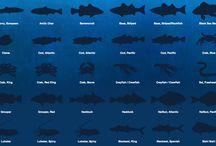 Seafood/Crustacean